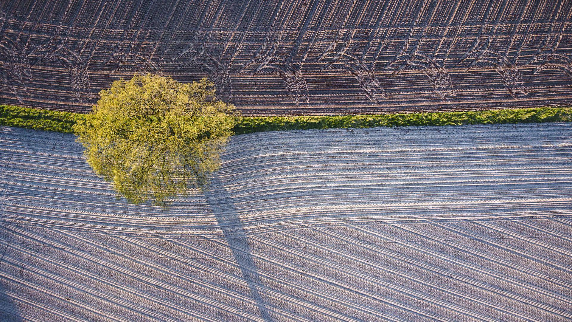 Luftaufnahme Feld und Baum enera Modellregion